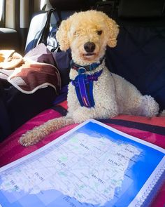 Lewis likes to take over when he thinks Joogzee needs a little assistance. So he is on the maps almost daily 🤣 . Dog Travel, Travel Tips, Maps, Cute, Animals, Blue Prints, Animaux, Travel Advice, Kawaii
