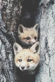 Two cute fox pups Cute Creatures, Beautiful Creatures, Animals Beautiful, Nature Animals, Animals And Pets, Wild Animals, Cute Baby Animals, Funny Animals, Animal Pictures