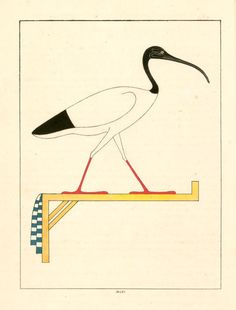 An ibis, emblem of Thoth, DuBois, 1823