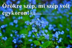 Kék nefelejcs. Poén is lehetne: ez volt a kedvenc virágod...