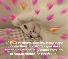 Love Phrases, Love Words, Memes Amor, Memes Lindos, Romantic Memes, Cute Love Memes, Spanish Memes, Wholesome Memes, Love Messages