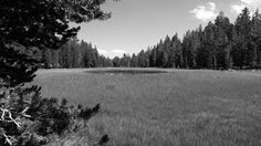 Meadow in Baker creek, Sierra Nevada. Black n White.