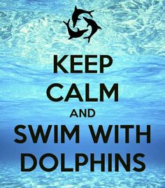 Keep calm and swim with dolphins