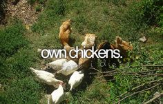 own chickens