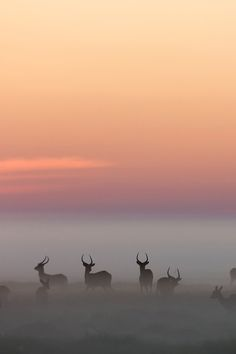 ♂ Silence nature Morning Mist by Michael Poliza