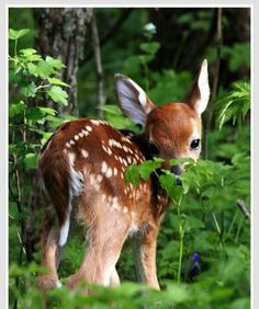 bambi!!