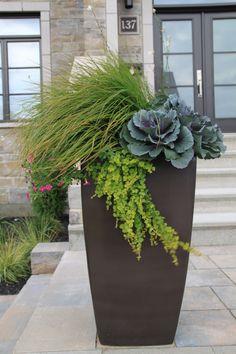Aménagement paysager. Jardin urbain. Pot de plantation avec végétation. - Lanscape design. urban garden