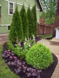 These few arborvitae will eventually grow to be about 12 feet tall. When shopping for a living screen, look for plants that need the soil, light and moisture conditions that your site can supply, and check the expected mature height and width on the plant tag.