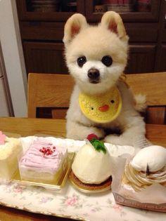 #wanko 今夜はケーキ食べ放題ʕ•̫͡•ʔ shunsuke