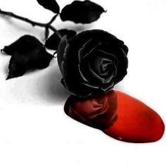 ☆ Bleeding Black Rose ☆