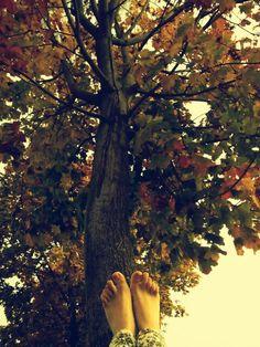 Legs in tree