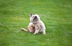 Think Your Dog Has Fleas? Here's What to Do. http://b.dogv.ac/1ZIOWUZ