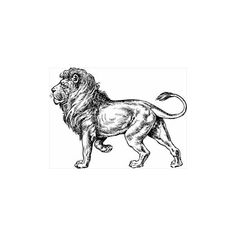 Free Lion-BW-sketch Clipart ❤ liked on Polyvore featuring animals, art, draw and fillers