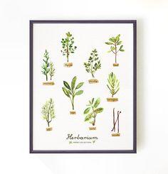 BUY 2 GET 1 FREE Kräuter Aquarell Malerei, Küche Kunst, Kräuter-Illustration, Herb prints, Digital Druck, Küche Décor, Herbarium, 8 x 10