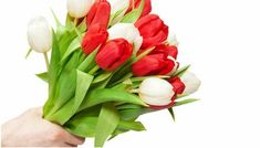О чем говорят цвети