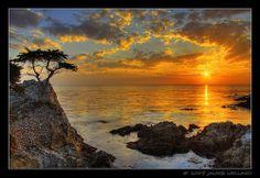 """Lone Cypress""  along 17 mile drive - pebble beach monterey california."
