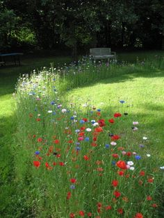 Wildflower path on the lawn <3