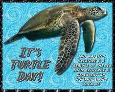 A gorgeous turtle card with a message. Free online This Majestic Creature ecards on World Turtle Day® World Turtle Day, Cute Hug, Romantic Messages, Romantic Times, Cute Turtles, Feeling Special, Say Hi, Cute Cards, Card Sizes