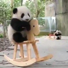 Baby Animals Super Cute, Cute Little Animals, Cute Funny Animals, Cute Cats, Cute Panda Baby, Baby Animals Pictures, Cute Animal Pictures, Panda Funny, Animal Antics