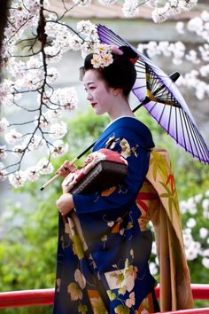 April 2016: maiko Tomitae of Gion Higashi under cherry blossoms by blue n white