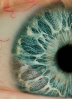 Inspiring picture blue, blue eyes, close up, eye. Find the picture to your taste! Pretty Eyes, Cool Eyes, Beautiful Eyes, Amazing Eyes, Human Eye, Human Body, Fotografia Retro, Foto Macro, Marlon Wayans