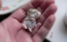 Fotos Dulces y Cariñosas de Tiernos Animalitos - Yaves.es Todo lo que tienes que ver de Internet.