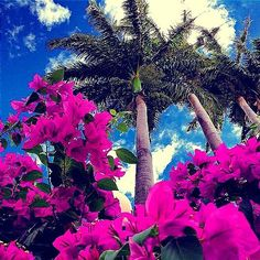 Mon pei  La Réunion  #island #tropical #team974 #reunionisland #974  #974island #sunrise #sun  #pretty #beautiful  #pink #sky #skyporn #cloudporn #nature #clouds #horizon #photooftheday #instagood #gorgeous #warm #view #morning  #instasky #all_sunsets #flowers #flowersofinstagram #flowersoftheday #wonderful #paradise by del.phiiine