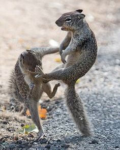 "Squirrels: ""Kung-fu Fighting!""                                                                                                                                                      More"