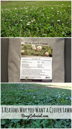 Advantages to overseeding your lawn with clover seed