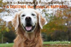 It is not happiness that brings us gratitude. It is gratitude that brings us happiness. Puppy Quotes, Dog Sayings, Share Button, Life Is An Adventure, Golden Retrievers, Puppies For Sale, Motivationalquotes, Life Lessons, Gratitude