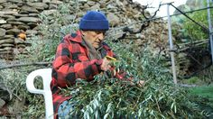 """""""The Greek island of old age-The inhabitants of a small Greek island live on average 10 years longer than the rest of western Europe. So what's the secret to long life in Ikaria?..."""""""