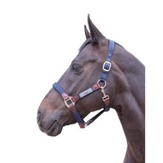 Madlen HKM Halter with contrast polyester nylon and padded crown and nosband. Grooming snap for easy grooming. Leather Halter, Horse Halters, Equestrian Gifts, Horse Tack, Horses, Horse