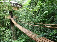 Every tree house really should have a bouncy bridge like this.  Makes it much more interesting to go home.