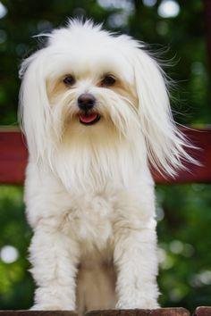 Paco by Linda Tiepelman, via 500px  beautiful photo of mixed breed dog