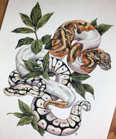 Go to Charcoal Drawing Course - Snake Painting, Snake Drawing, Snake Art, Python Drawing, Art Inspo, Kunst Inspo, Animal Drawings, Cool Drawings, Art Du Croquis