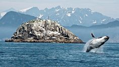 Alaska - kenai fjords national park, best seen by boat.  Take an overnight sea-kayak tour with Kayak Adventures Worldwide, which includes a three-hour boat ride to 22-mile-long fjord Aialik Bay, where you'll see whales, sea otters, sea lions, and puffins ($699). You'll paddle along the mile-wide face of Aialik Glacier, then head two miles south to camp near Pedersen Glacier's lagoon, with a maze of icebergs to explore.