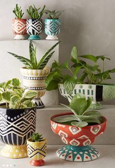 Beautiful flower pots Houseplants, Pots For Plants, Cacti And Succulents, Potted Plants, Indoor Plants, Flower Pot Design, Painted Plant Pots, Indoor Flower Pots, Ceramic Flower Pots