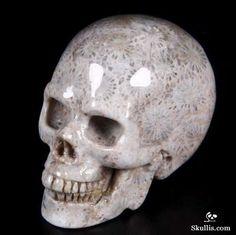 Coral Fossil Crystal Skull