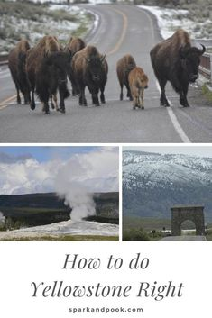 Visiting Yellowstone National Park is sure to be a memorable experience, but make it the best possible visit with these tips. Visit Yellowstone, Yellowstone National Park, National Parks, Summer Activities For Kids, Summer Kids, Lamar Valley, Book Reviews For Kids, Old Faithful, Safety Tips