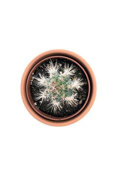 Cactus Plant Print Photo Instant Download Digital by 1919Print