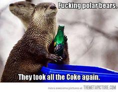 Poor otters lol