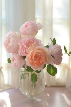 49 Ideas for garden rose bouquet pretty pastel Beautiful Rose Flowers, Beautiful Flower Arrangements, Amazing Flowers, Floral Arrangements, Beautiful Flowers, Fresh Flowers, Foto Rose, Garden Rose Bouquet, Rose Vase