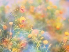 Ethereal flower meadow