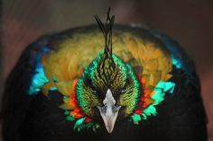 Color in Nature : Himalayan Monal