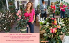 "SET YOUR DVR'S FOR FRI. 2/13/15 @10AM PST! Shirley Bovshow presents ""Camellias 101 featuring world class Camellias from Monrovia Plants on the Home & Family show on Hallmark Channel USA. Come on and get your gardening on! EdenMakers.com"
