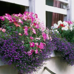 Plant layers of flowers that will grow to alternating heights in different colourways for a punchy, vivid window statement. Grouping colours that sit in the same colour wheel, such as pinks and purples, will ensure maximum impact.