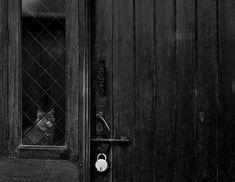 Gatos solitários (Foto: Reprodução) porque o cadeado?