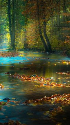 """@MMP__Dreams2: @FancyRoseW صباح النور ""dream land!"