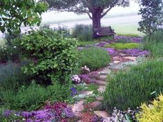 stone path with ground cover in between