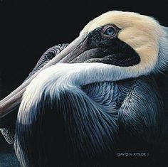 "pelican painting by David N. Kitler.  Acrylic on birch board, 10.5"" x 10.5"""